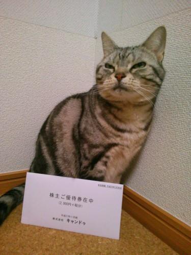 株主優待券と猫さん
