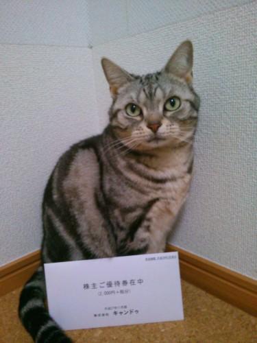 キャンドゥ株主優待と猫さん