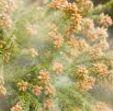 花粉症が辛い、花粉症の薬は市販薬と処方薬のどっちがお得なのか?